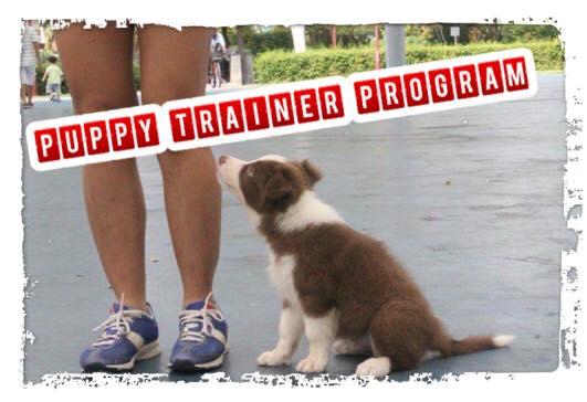 puppytrainer