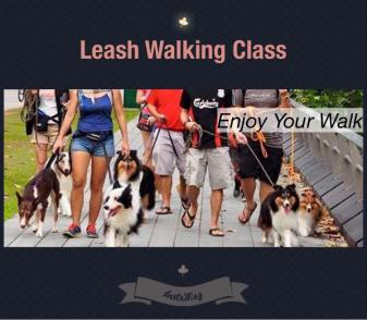 Leash Walking Class